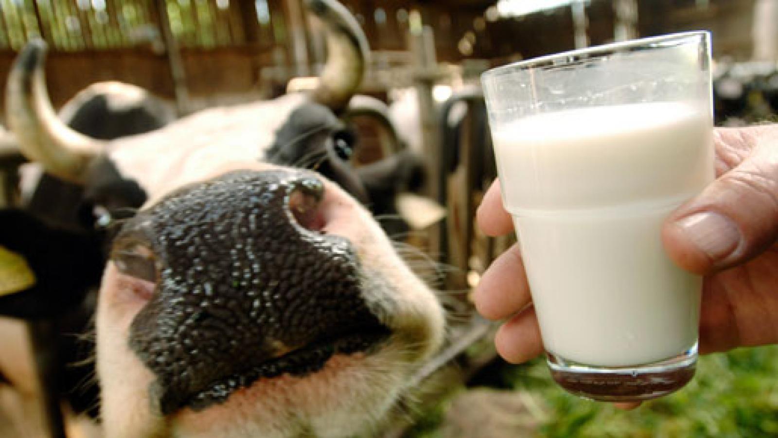 Развитие молочной отрасли РФ в 2017 году ограничено существующим производством молока сырья