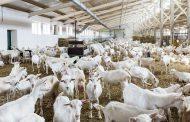 Ферма «Лукоз Саба» получила статус племзавода